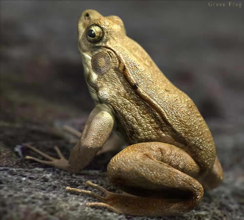 3D Animal Artworks by Massimo Righi