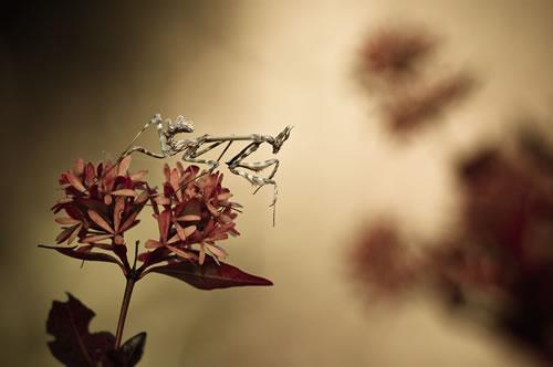 still life macro photography